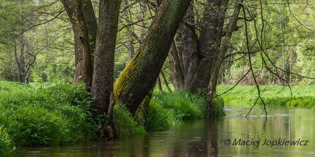 Nad brzegami rzek i jezior